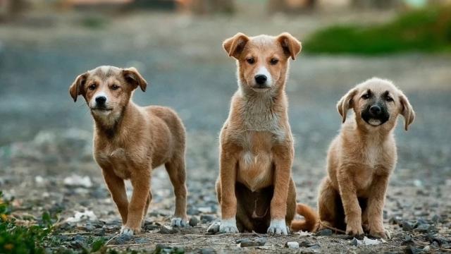 За прошлый год уменьшилось количество нападений на людей со стороны бродячих собак