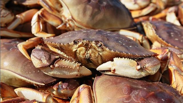 Новый проект Росрыболовства игнорирует интересы рыбаков